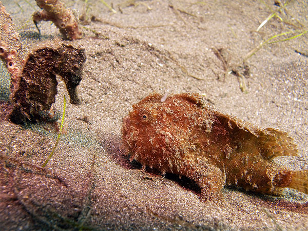 erm.. the frogfish didn't really like the horse meat...
